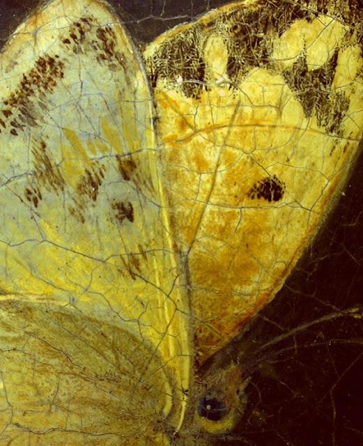 Detalje med sommerfuglevinger fra fra Stilleben med tidsel og slange af Otto Marseus van Schrieck