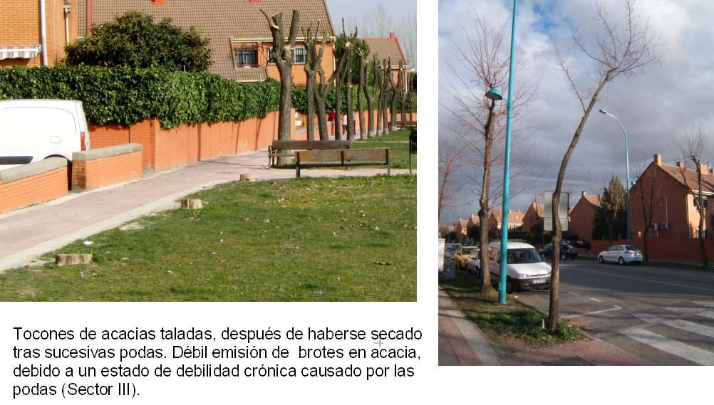 El observador de la jardiner a urbana rboles mutilados for Calle jardines getafe
