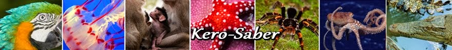 Kero-Saber