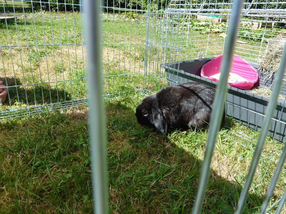 Un lapin dans le jardin un lapin dans le jardin - Mon petit lapin s est sauve dans le jardin ...