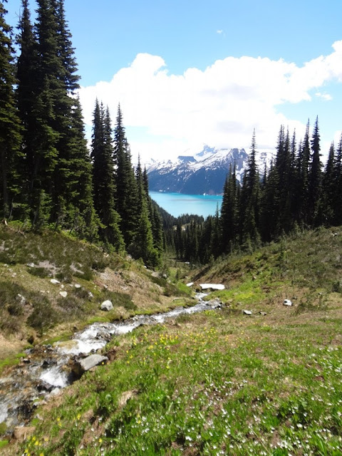 View of Garibaldi Lake from Taylor Meadows