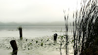 Old dock posts and reeds mingle on a nice quiet misty morning