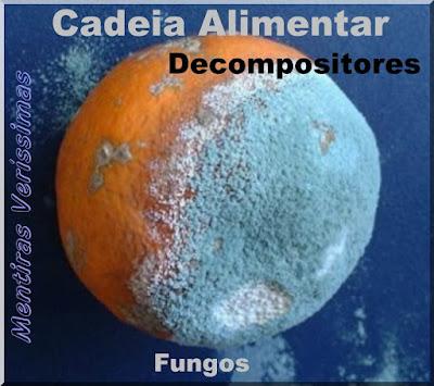 Foto mostrando uma laranja em decomposição através de fungos. Os fungos são decompositores dentro da cadeia alimentar