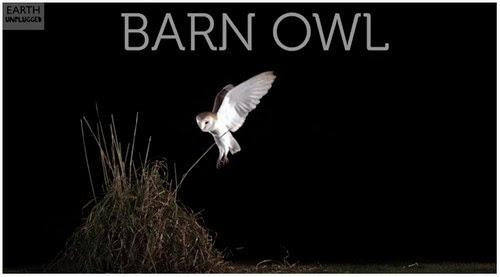Gerak Perlahan Burung Hantu Menangkap Mangsa Video