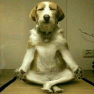 Anjing, Dog, Anjing duduk, Asusila