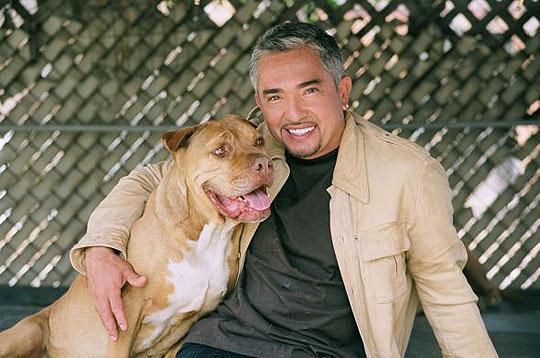 Dog Biography Millan Cesar Whisperer