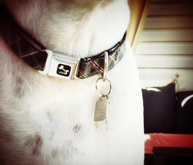 Dog's collar and tag that jingles as he walks.