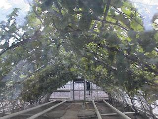 Druiven kweken in serre