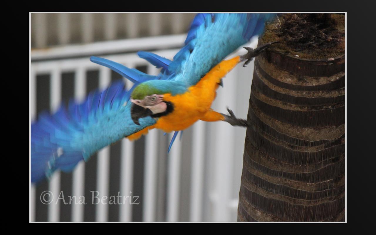 Clases De aves Del Mundo