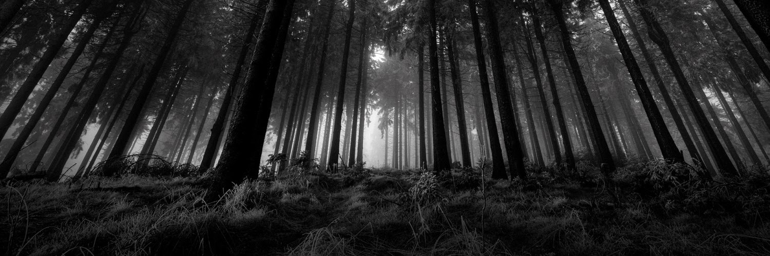 Black And White Nature Twitter Header | www.pixshark.com ...