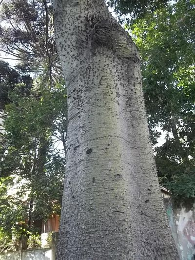 Árvores, folhas, troncos, florestas