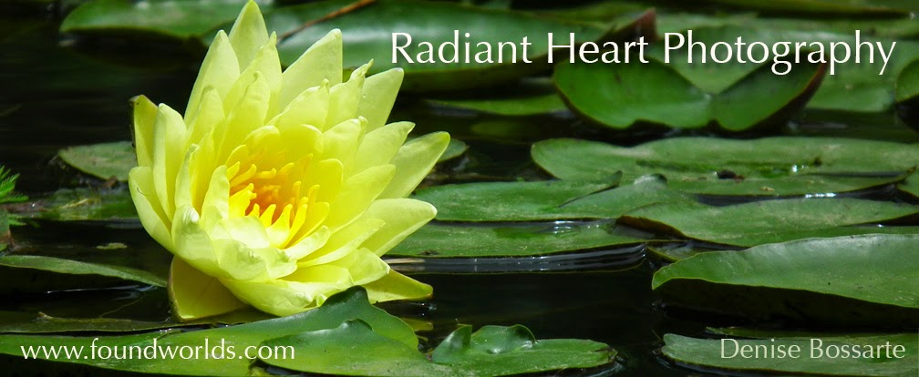 Radiant Heart Photography