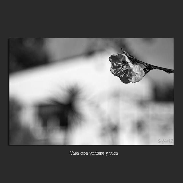 Flor de albaricoque en blanco y negro