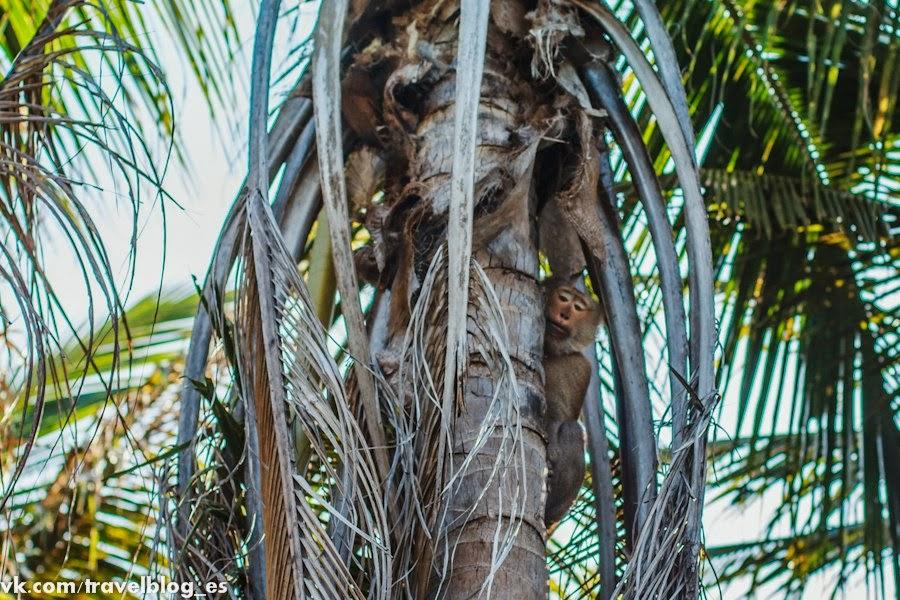 Скоро вниз полетят кокосы