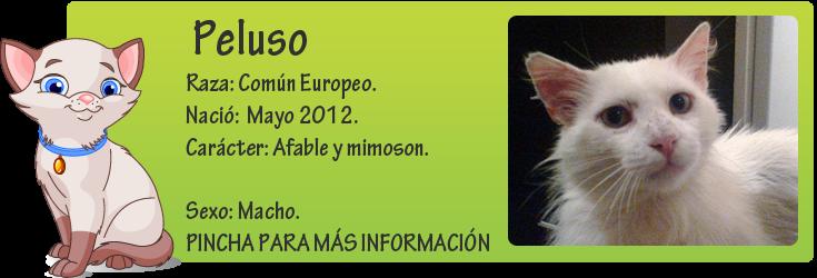 http://mirada-animal-toledo.blogspot.com.es/2013/05/peluso-preciosidad-en-adopcion.html