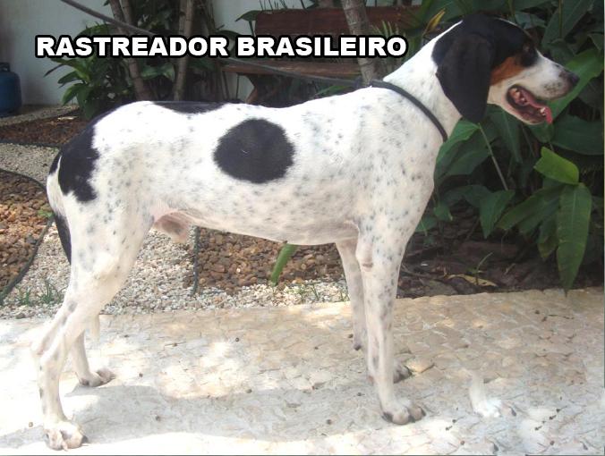 Бразильский растреадор RASTREADOR+BRASILEIRO