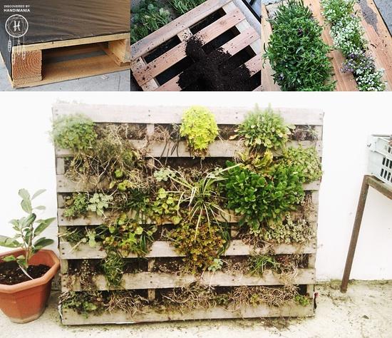 Mur Vegetal Palette Un Petit Mur Vgtal With Mur Vegetal Palette With Mur Vegetal Palette Mur