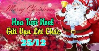 Hoa Tươi Tặng Người Yêu - Giáng Sinh 2015 Tại Đà Nẵng