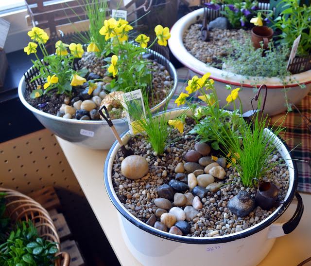 Miniature garden giveaway creating your own little world ramblings from a desert garden - Fairy garden containers for sale ...