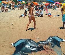 Crime Ambiental na Praia do Buracão