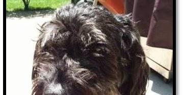 Overland park dog barking ordinance