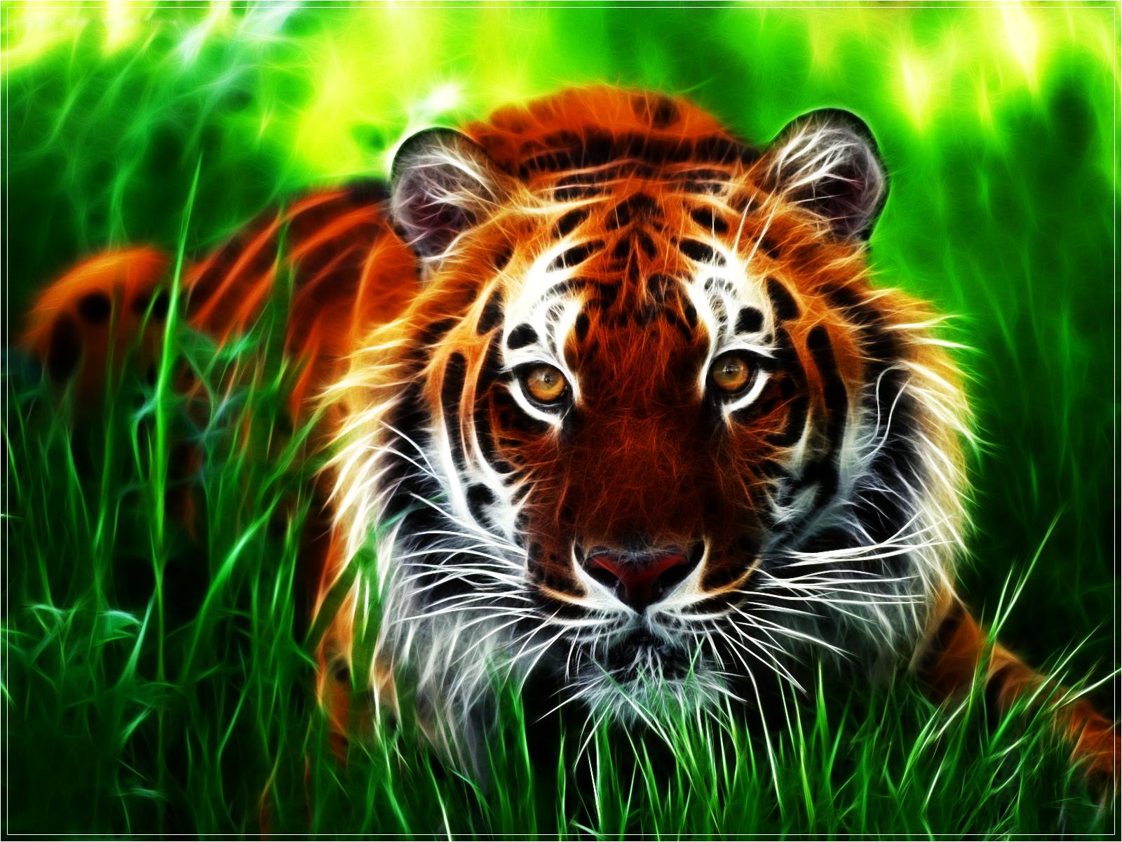 http://1.bp.blogspot.com/-VvJ9uBOyVq8/UGQBXLjR-EI/AAAAAAAAHBM/RsPJZkR5FNc/s1600/Tiger-wallpaper-17.jpg