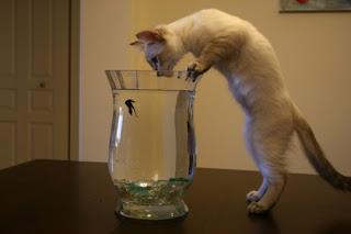 cat gifs com