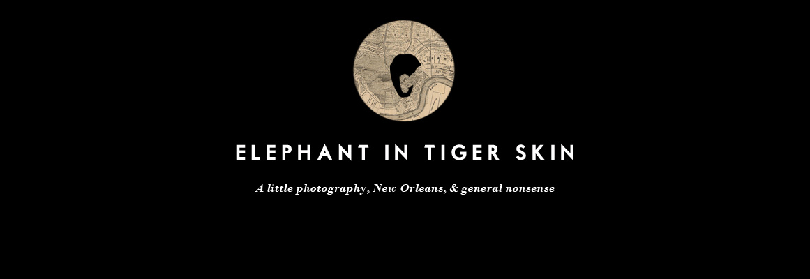 Elephant in Tiger Skin