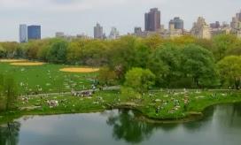 Central Park Best