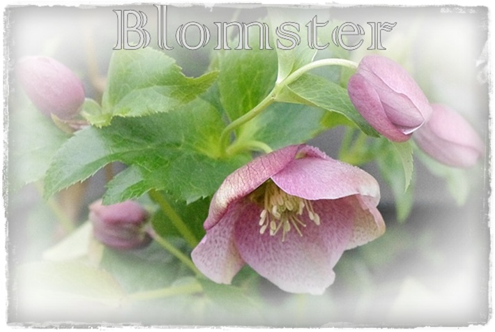 Blomster