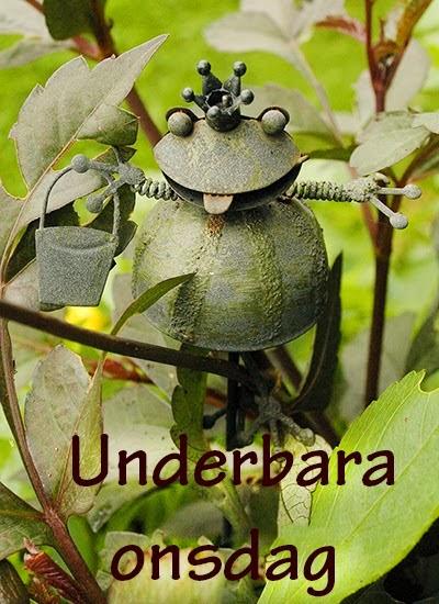 Fototema Underbara onsdag