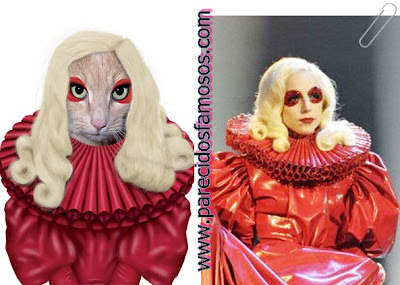 gata con Lady Gaga