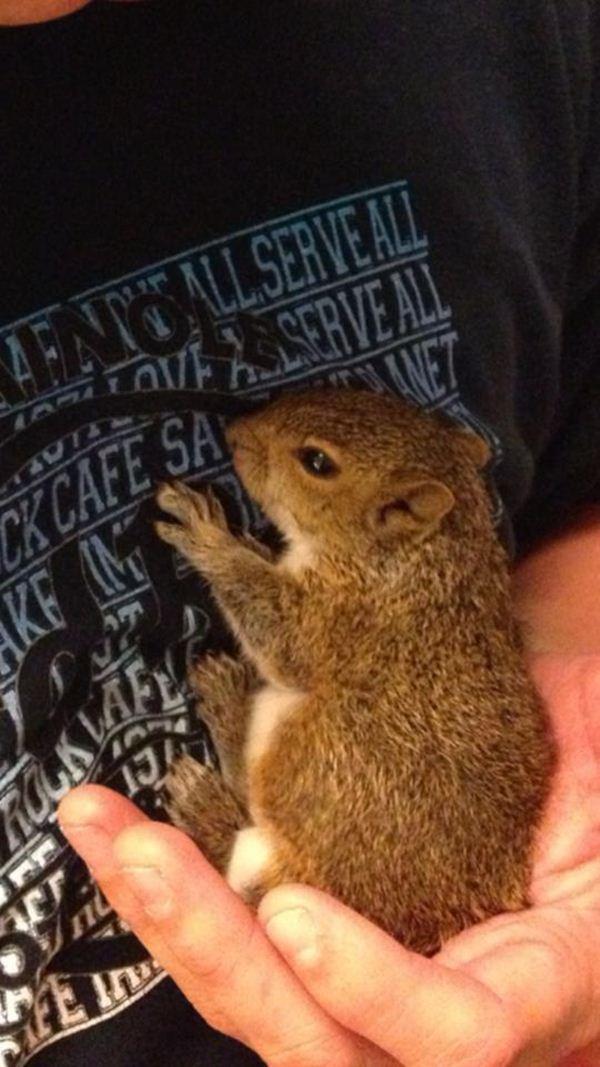 Baby squirrel found in a bag of mulch, cute baby squirrel, baby squirrel pictures, cute squirrels