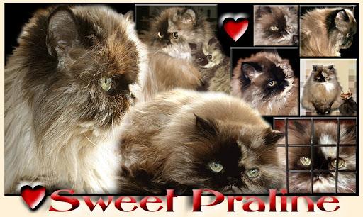 Sweet Praline