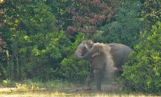 Elephant-in-Wilpattu-National-Park