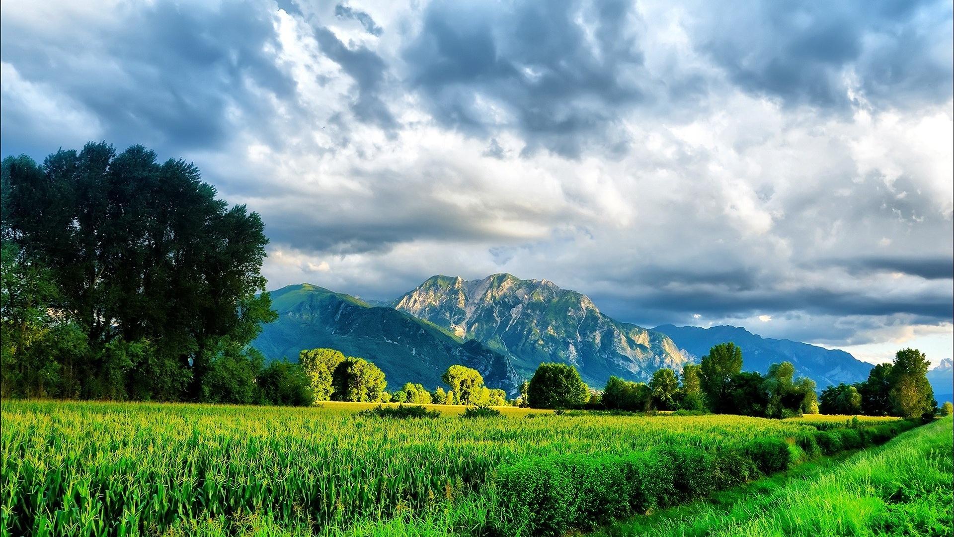 green nature full hd desktop wallpapers 1080p