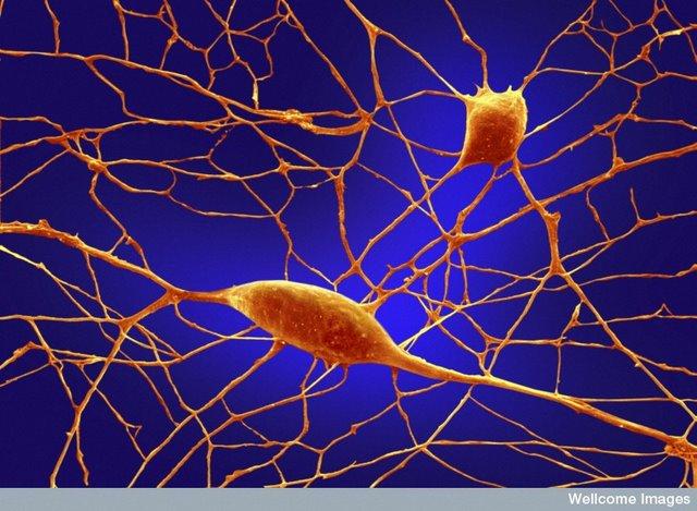 Metode pemrosesan oleh otak biologi dari belajar tinjauan tentang