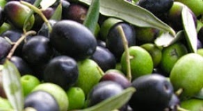 Ascolano Olive Variety It has an apricot/stone fruit flavor that is very distinctive. The ripe oil has a strongly tropical note.