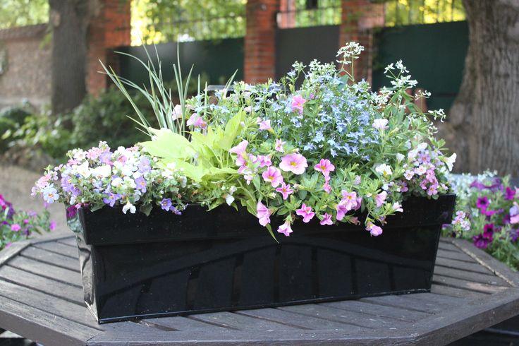 Jardini res d 39 hiver et diverses pour tous les go ts donc for Jardiniere d hiver