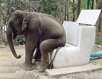 Funny and Wild Animals : Funny Animals Elephant