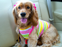 Lucy all decked out and on the way to Dog Days