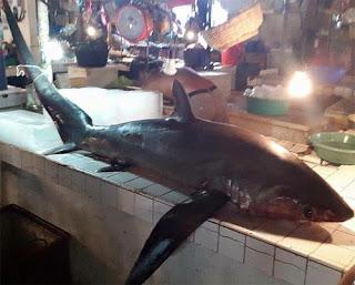 Thresher Shark spotted in Tagbilaran City fish market