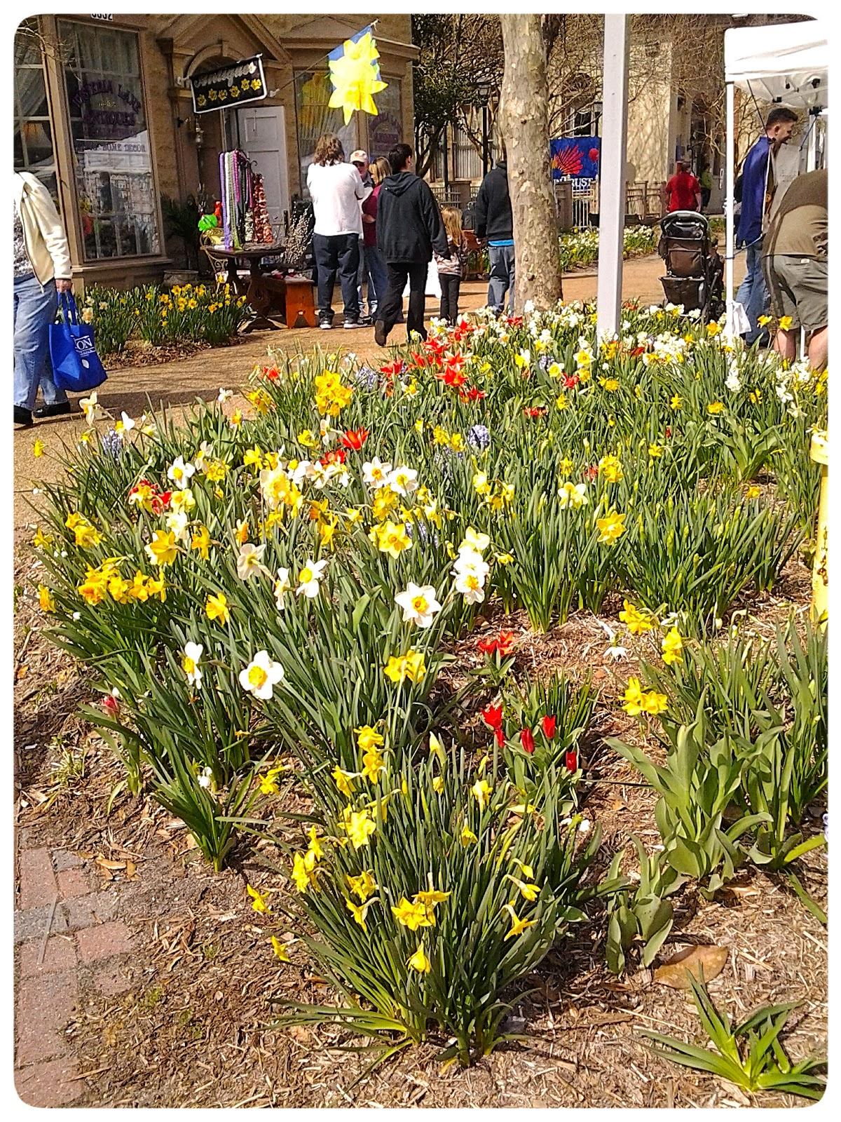28th Annual Gloucester Daffodil Festival via foobella.blogspot.com