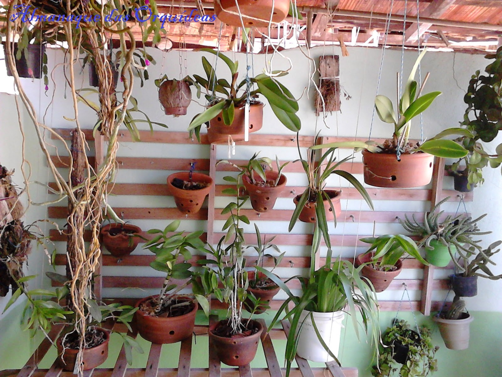 jardim vertical lisboa:jardim vertical com orquidea 14