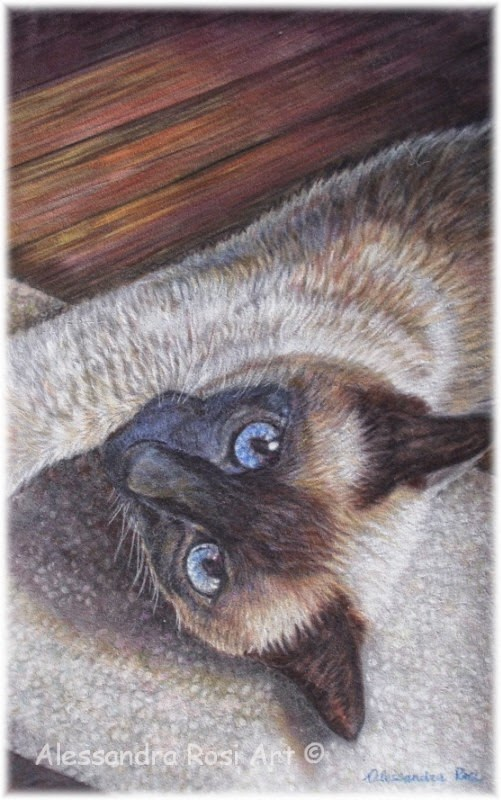 cat portrait painting - custom pastel portrait of pets - cat art