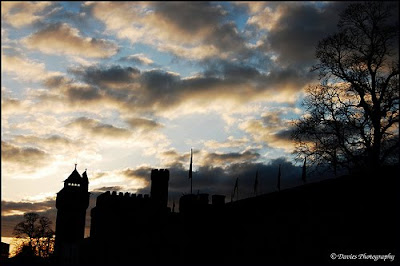 Cardiff Castle and Tree