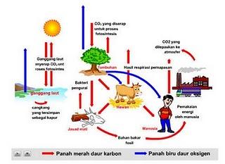 Ekosistem Aliran Energi Siklus Materi Dan Aliranmateri