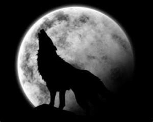 O Uivo Dos Lobos