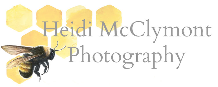 Heidi McClymont Photography