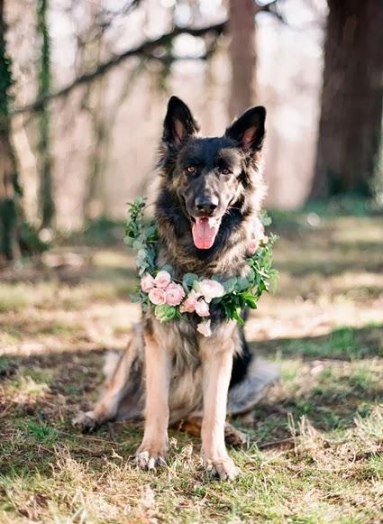 blomsterkrans hund, flower wreath dog, blommor hund, flowers dog, blommor till hunden, flowers for the dog